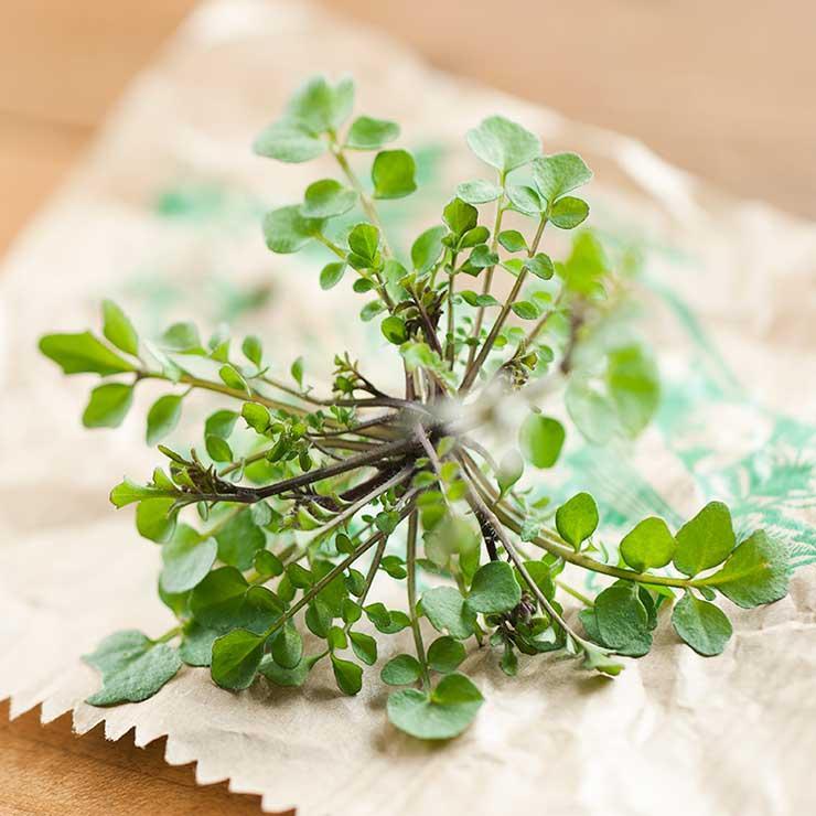 X fűszernövény, amikkel megőrizheted az agyad épségét