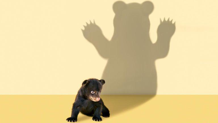 A két kamcsatkai medve, Tibor és Romulus kijött a barlangjából