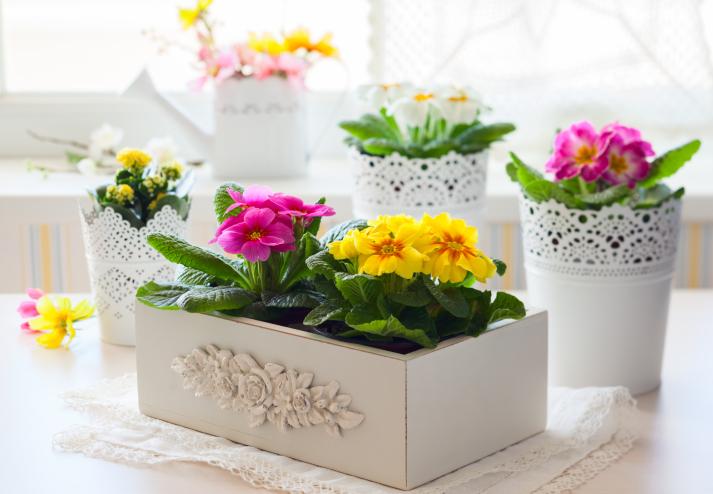 Ezeket a szobanövényeket tartsd távol a gyerekektől és a kis állatoktól!