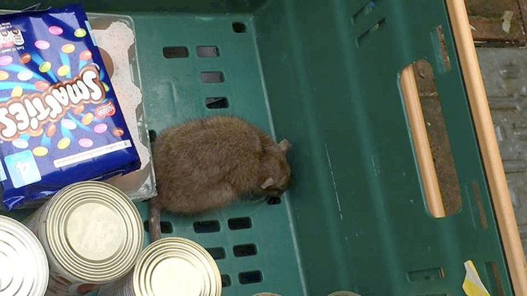 Patkányt talált a család a Tescho házhoz szállított csomagjában