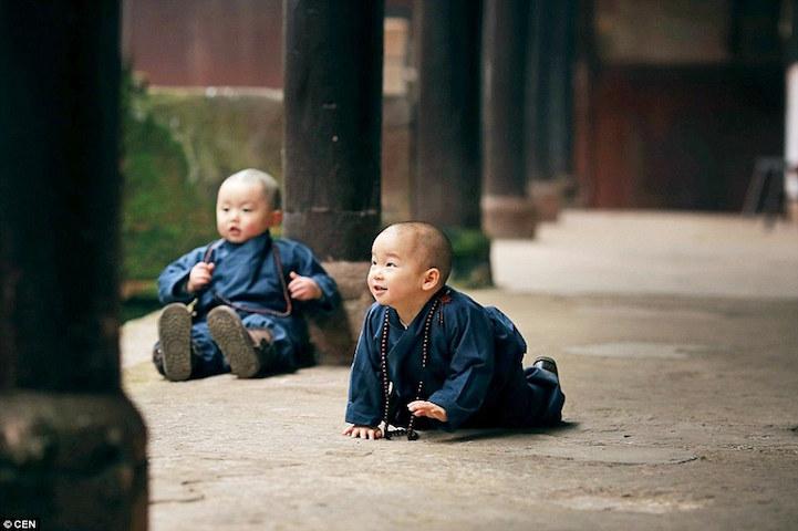 Tündéri bébi szerzeteseket imád az internet - fotók