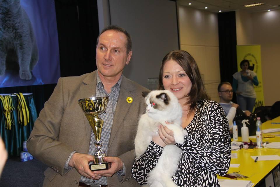 Lila macska lett a győztes a budapesti kiállításon