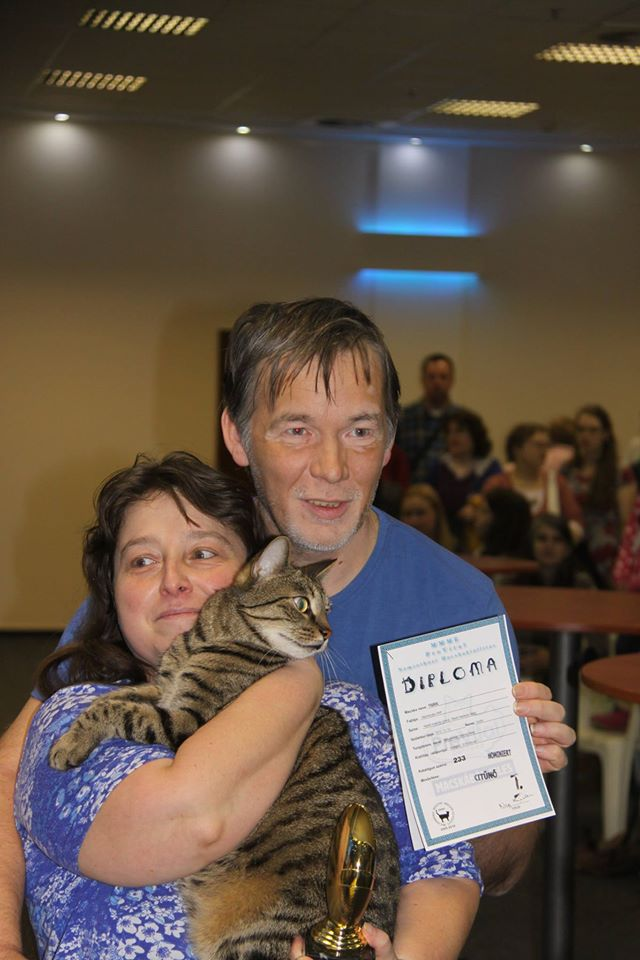 Tigris, a házimacska kategória többszörös bajnoka gazdáival