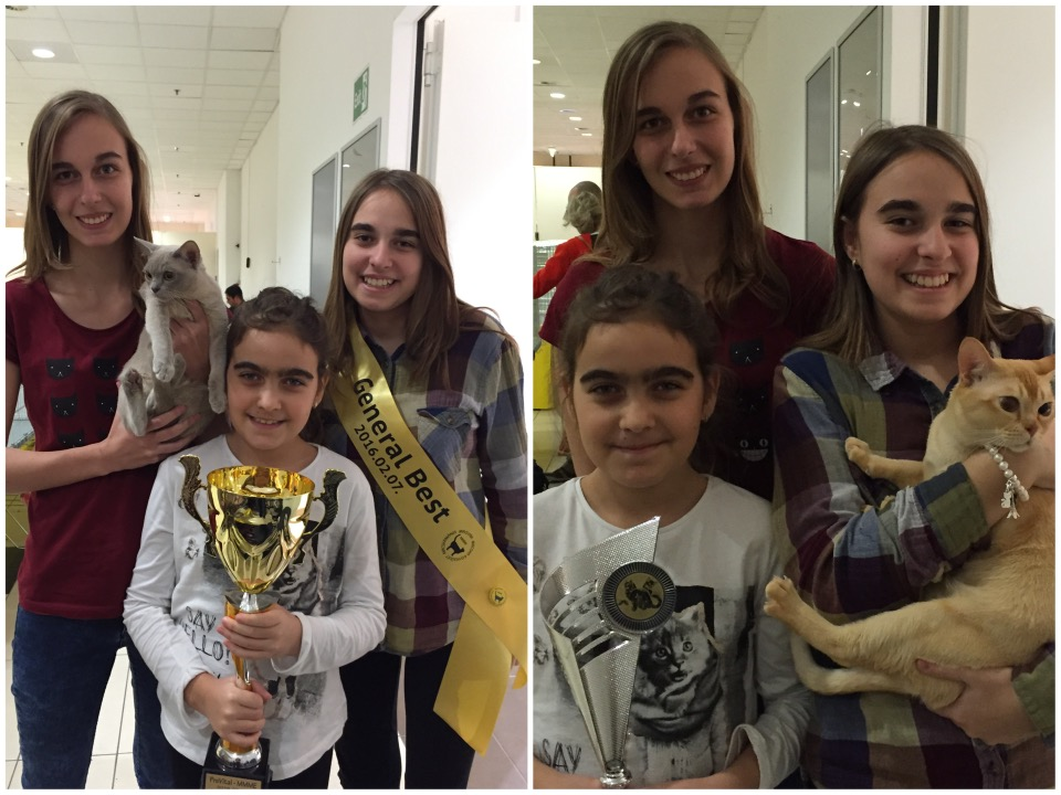 Két bajnok - egy tenyészet: a rövidszőrű kandúrok legszebbje és kiállítás győztese a tenyésztő, Szemán Judit lányaival
