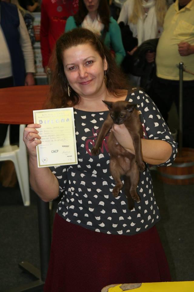 A győztes cica 4 hónapos kisöccse, Kókusz első diplomájával