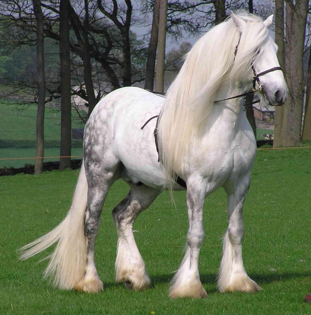 Ezeknél a csodás lovas fotóknál ma már nem látsz szebbet