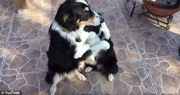 Hangolódj a Valentin-napra ezzel a két ölelkező kutyával!