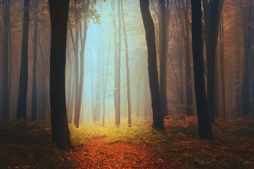 Mesebeli fotók egy misztikus erdőről