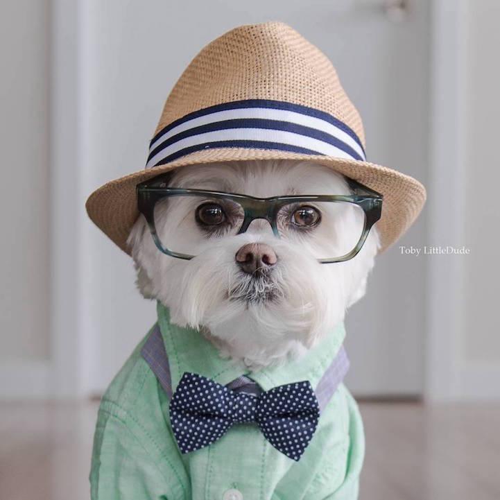 íme a világ leghipszterebb kutyája - vicces fotók
