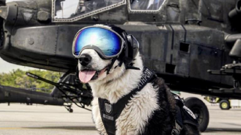 Akcióhős is lehetne ez a reptéri kutya - képek