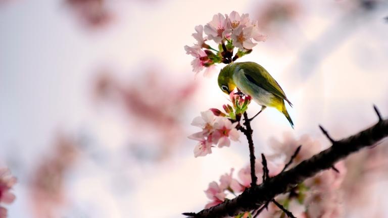10 inspiráló tavaszi háttérkép – töltsd le most | nlc