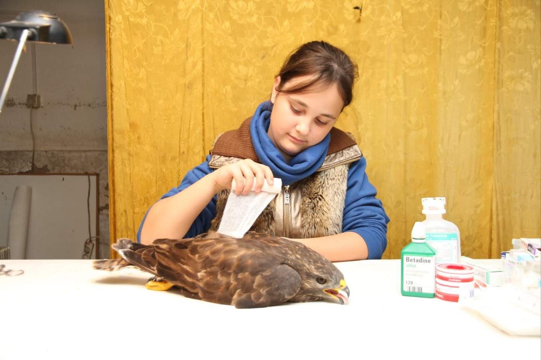 Több száz madár köszönheti életét a 13 éves magyar kislánynak