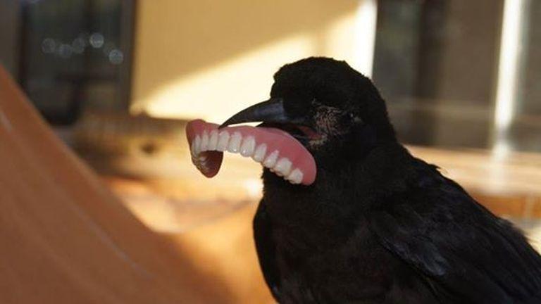 Sátáni vigyor ült ki a madár képére