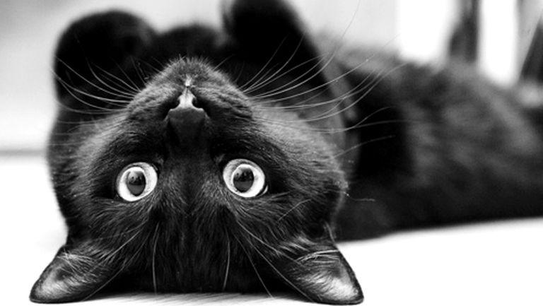 A fekete macska pornó