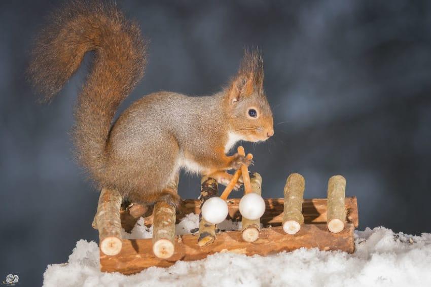Fergeteges fotókat készített a kertjében élő mókusokról a fotós - cuki képek