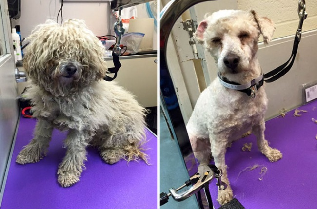 Ingyen vágja a menhelyi kutyák szőrét ez a férfi - képek