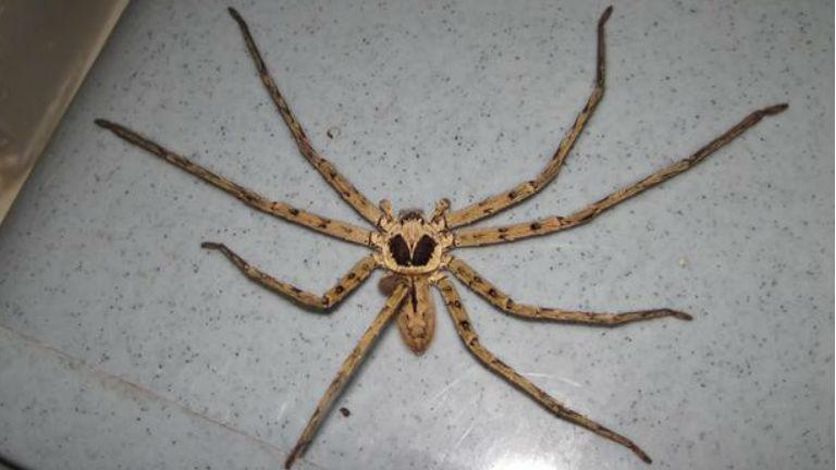 Veszélyes pókot találtak egy szupermarketban