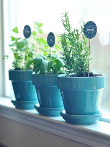 Fűszernövények otthon: 9 tipp a gyönyörű fűszerkerthez