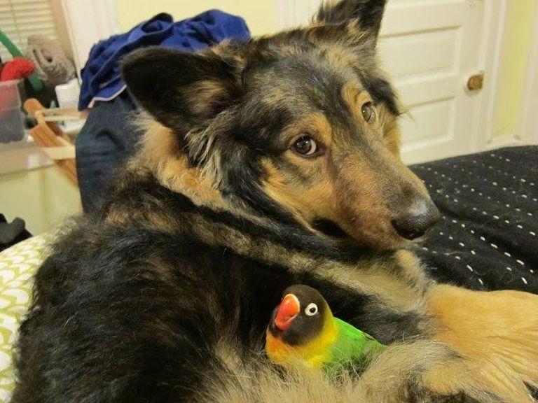 Átmeneti kutyafészek