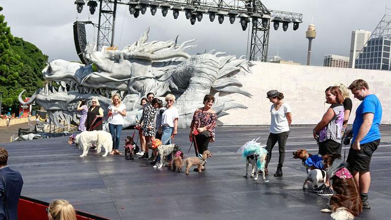 Operába öltöztek a kutyák - vicces fotók