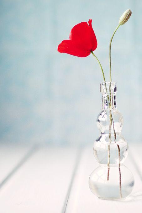 Már nem kell sokat várni a pipacsra. És ugye milyen jól mutat egy egyszerű üvegvázában?