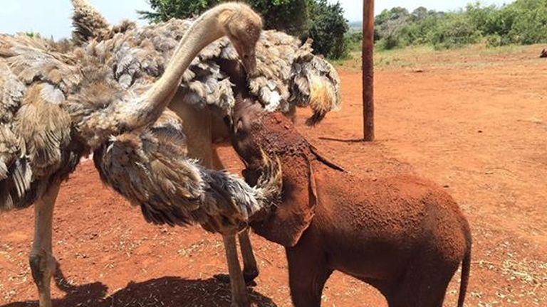 Struccok segítenek felnevelni az árva elefántokat