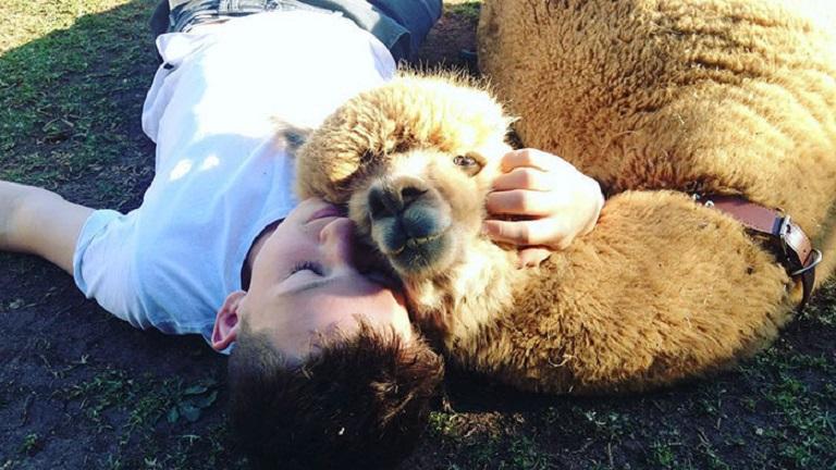 Szülei nem engedték a fiúnak, hogy kutyája legyen - egy alpakát vettek neki helyette
