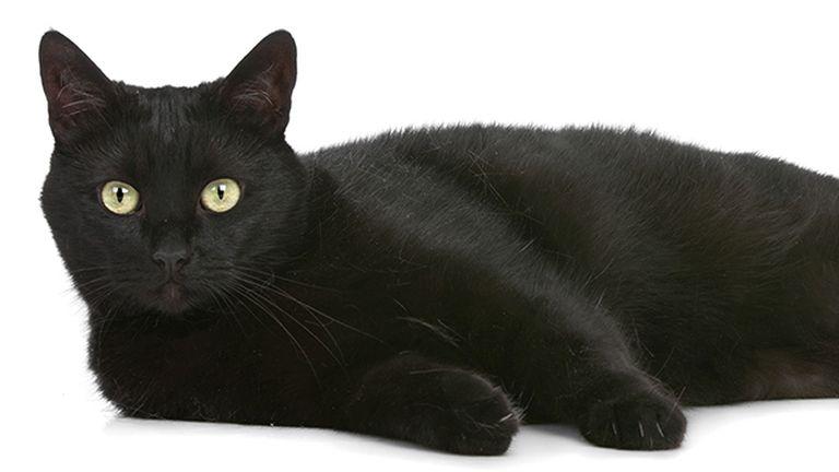 Sokak szerint a macskák a világ urai