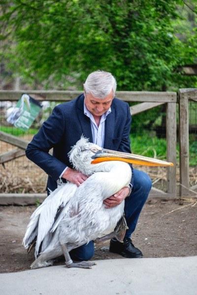 Páratlan páros: pelikánt pesztrál a prágai professzor