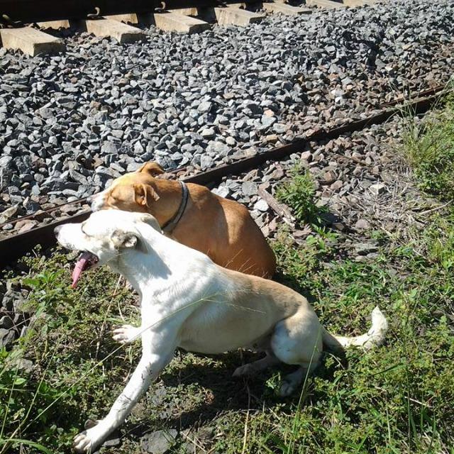 Nem mozdult haldokló barátja mellől a hűséges kutya