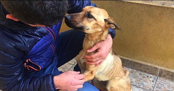 Menni sem tudott az éheztetett kutya, mikor rátalálták – most nézzétek meg