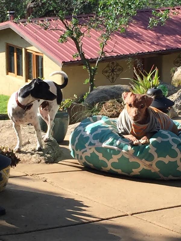 Jóra fordult a borzasztó körülmények között tartott vak és rákos kutya sorsa
