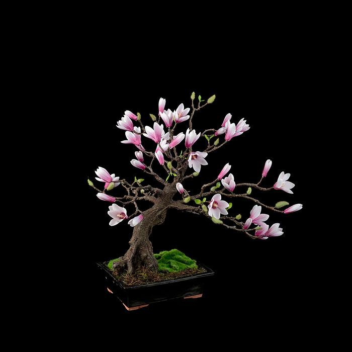 Dekoráld fákkal a lakásod: 6 gyönyörű bonsai