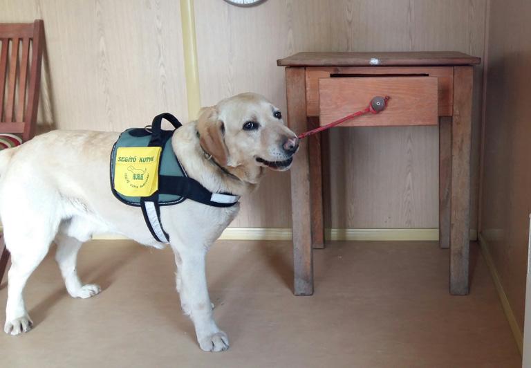 Arra született, hogy életet mentsen - bemutatjuk Pénteket, a rohamjelző kutyát