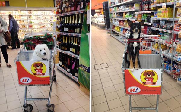 Kutyabarát bevásárlókocsikkal szerelték fel a szupermarketet - képek