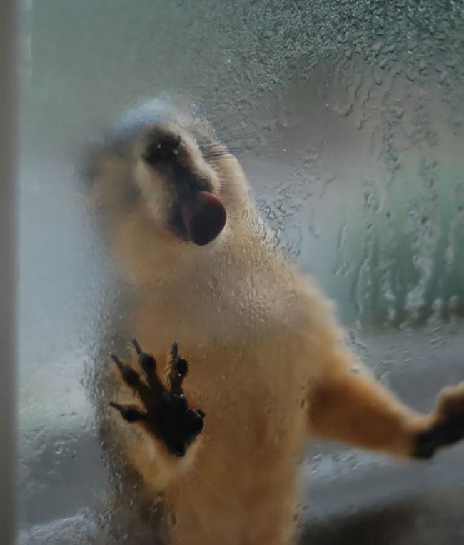 Azonnal jobb kedved lesz az üvegre tapadt cuki állatoktól