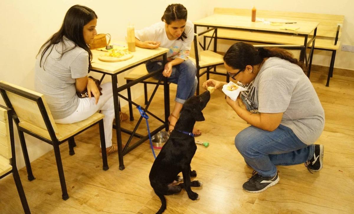 Cukiság: megnyílt Delhi első kutyás kávézója