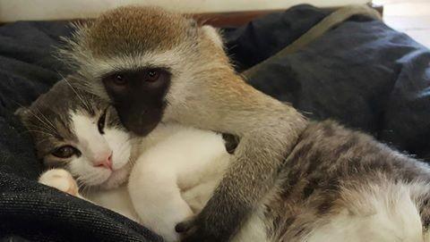 Tündéri fotók: minden állattal összebarátkozik a kismajom