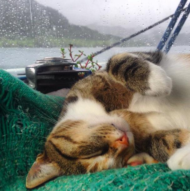 Macskájával vitorlázza körbe a világot a fiatal nő