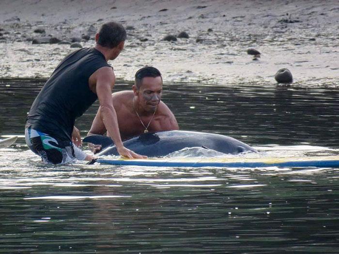 Szörfösök segítettek a bálnabébin - videó