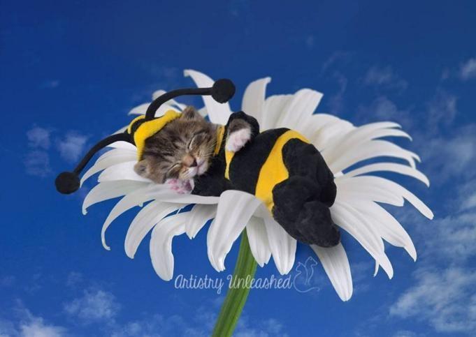 Tetszenek maguknak a terhes macskák - tündéri fotók