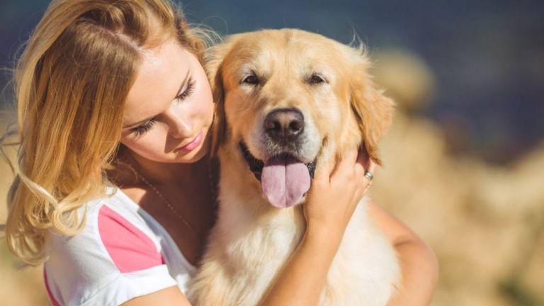 A simogatást jobban szeretik a kutyák