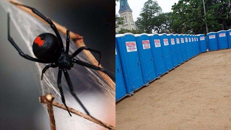 Mobilvécén harapta péniszen a mérges pók a szerencsétlen férfit