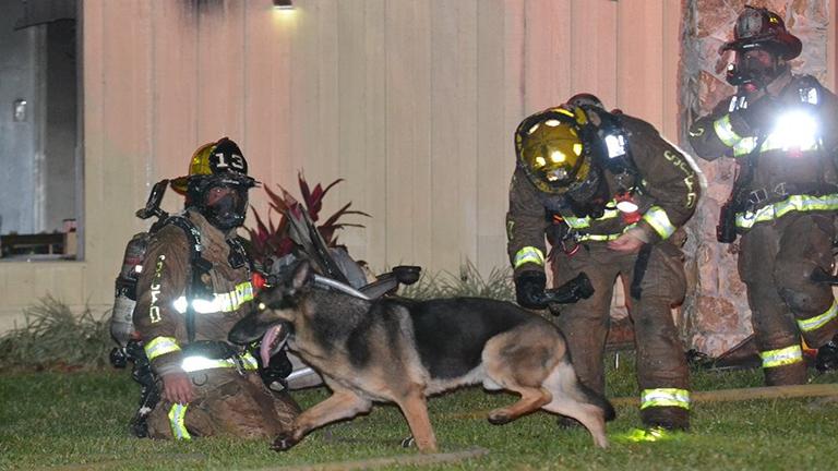 Hős kutya vezette a tűzoltókat az égő házhoz