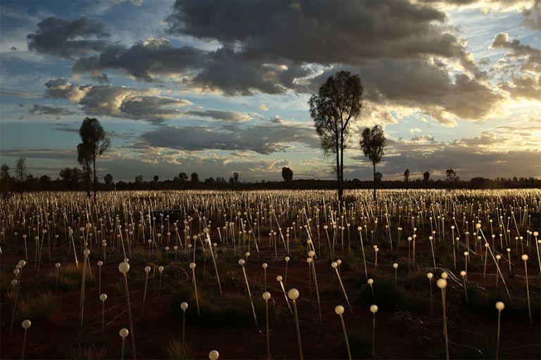 Tízezernyi lámpásból varázsol virágmezőket egy művész