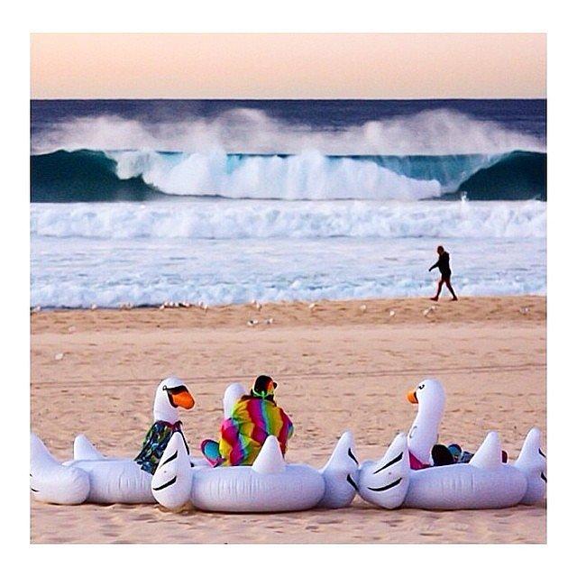 A felfújható hattyú lesz az idei nyár strand-slágere - képek
