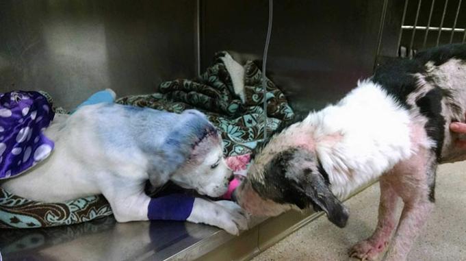 Csodás fotó: sorstársát nyugtatja a mentett kutya