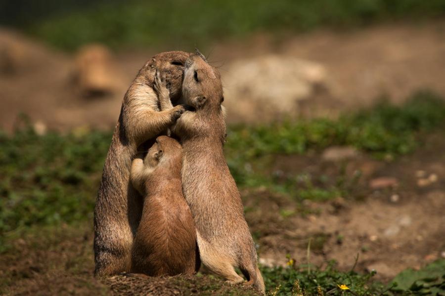 Állatok, akik megmutatják, hogy milyen az igazi szeretet - fotók