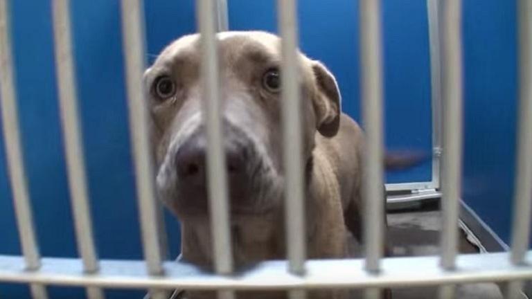 Egy nap alatt az összes állatot örökbefogadták erről a menhelyről - videó
