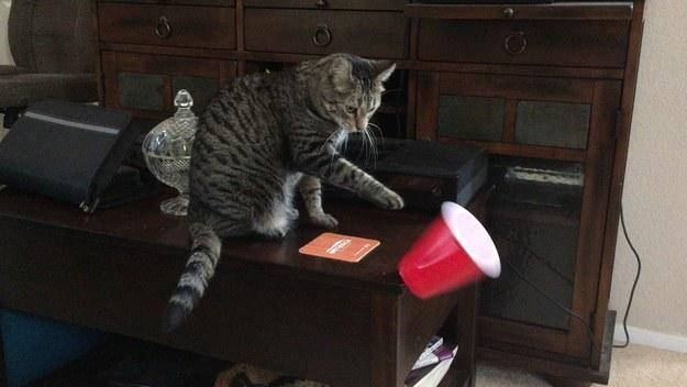 10 dolog, ami csak macskatartókkal történhet meg